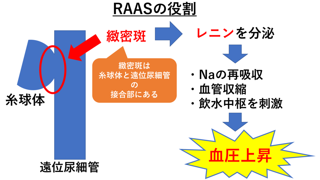 RAASの役割(図解)