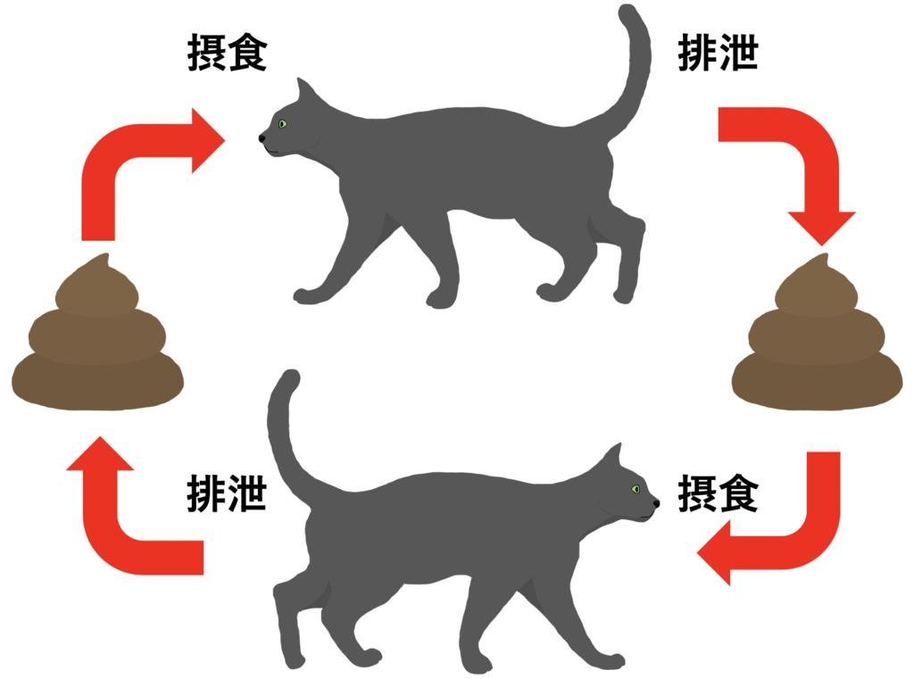 糞口感染とは(図解)