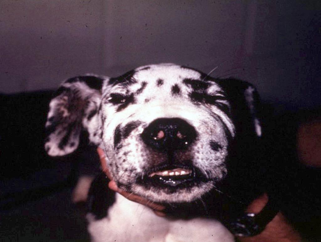 ラバージョーの写真