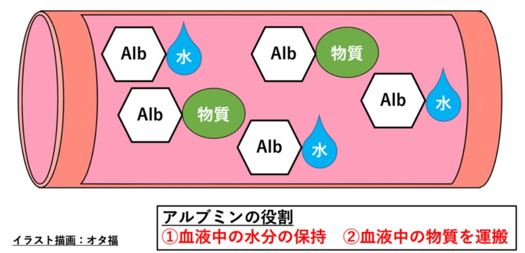 アルブミンの役割(図解)
