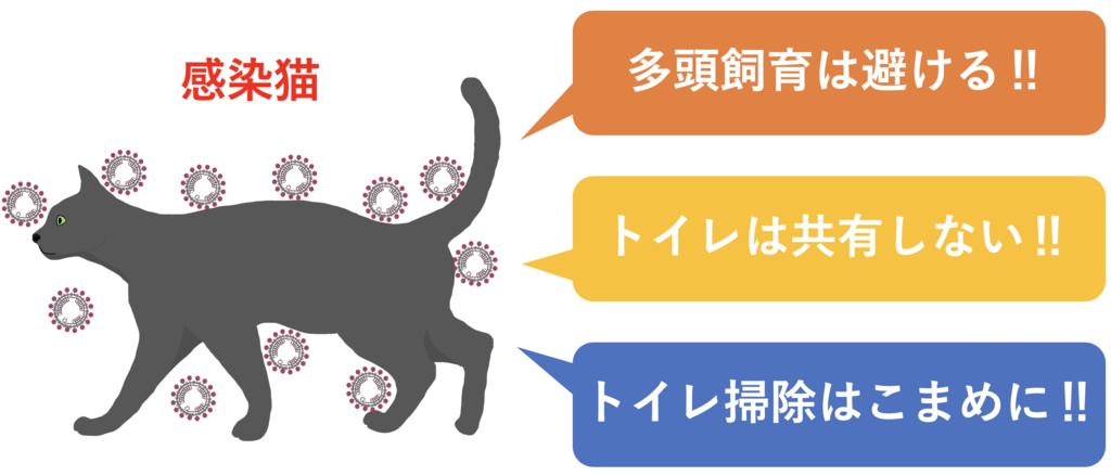 感染猫の管理方法(図解)