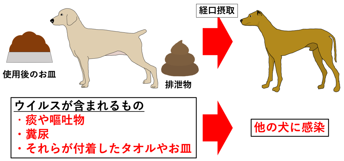 犬ジステンパーウイルスの伝播様式