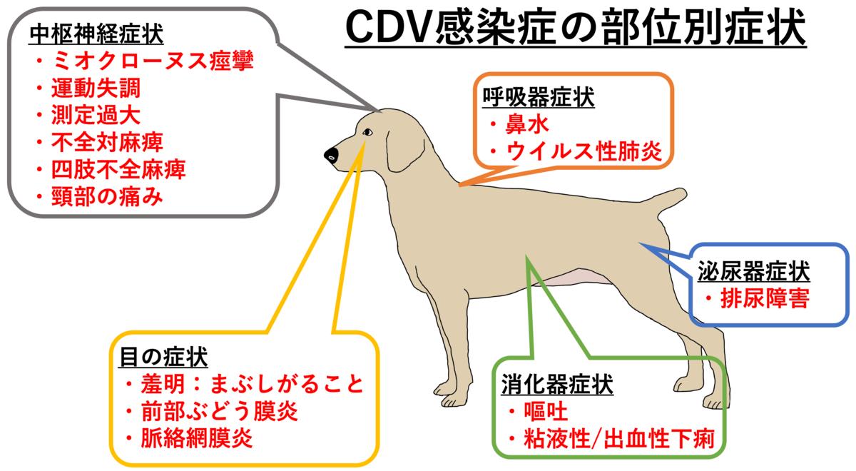 犬ジステンパーウイルス感染症、部位別症状