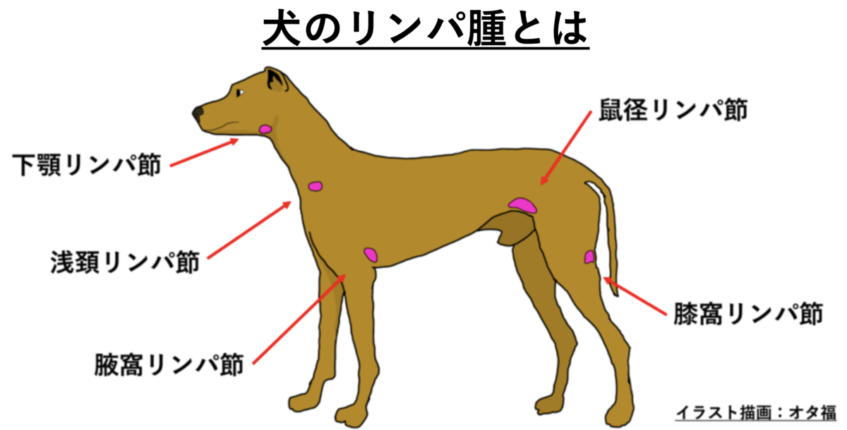 犬のリンパ腫アイキャッチ画像