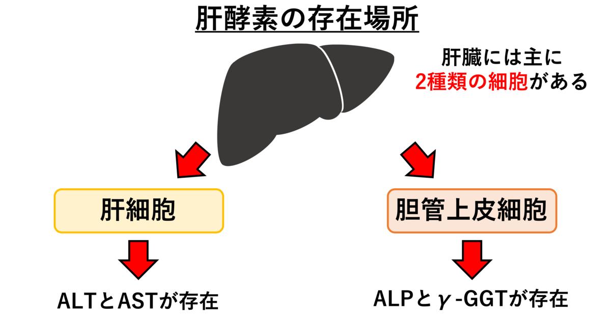 Ast 血液 検査