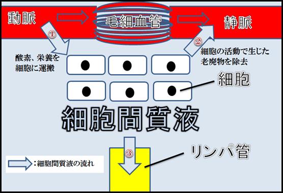 f:id:otama-0201:20170208213603p:plain