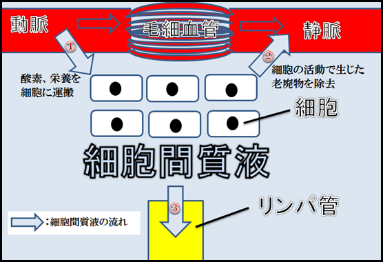 f:id:otama-0201:20170217211211p:plain