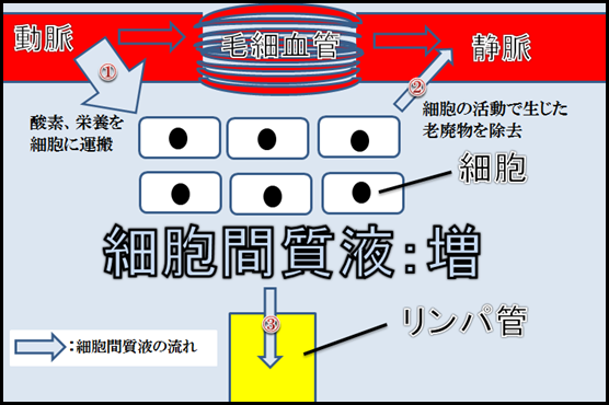 f:id:otama-0201:20170217211536p:plain