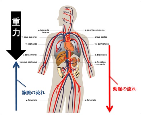 f:id:otama-0201:20170218213443p:plain