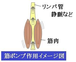 f:id:otama-0201:20170222205141j:plain