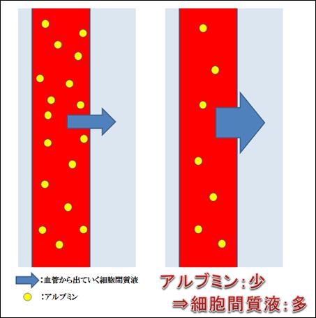 f:id:otama-0201:20170228210204p:plain