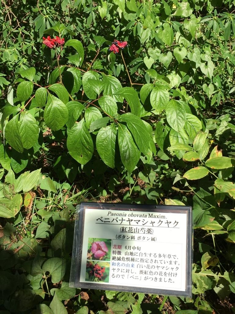 f:id:otasuke0411:20170930203644j:plain