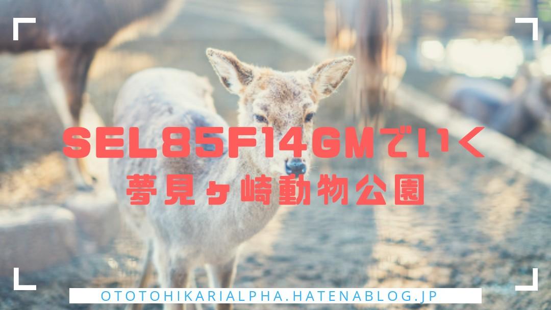 f:id:otohikarialpha:20190317233417j:image