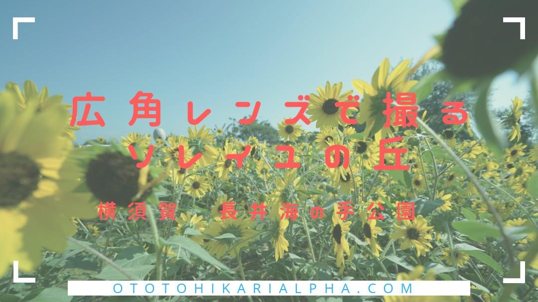 f:id:otohikarialpha:20190826090218j:image