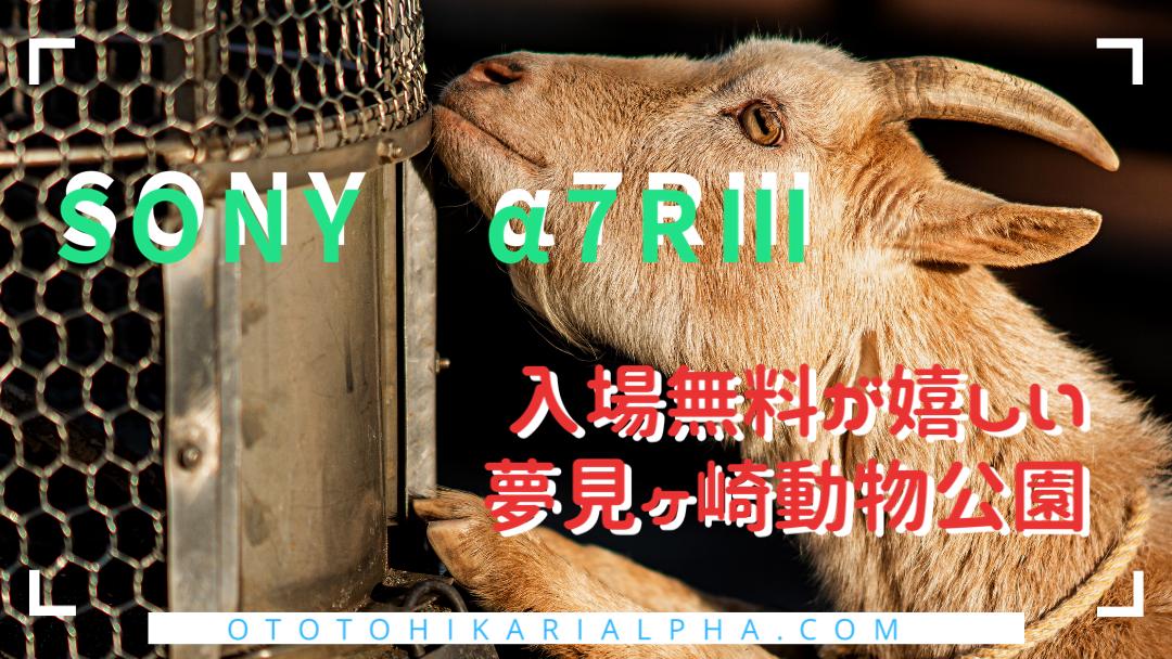 f:id:otohikarialpha:20200211103036p:plain