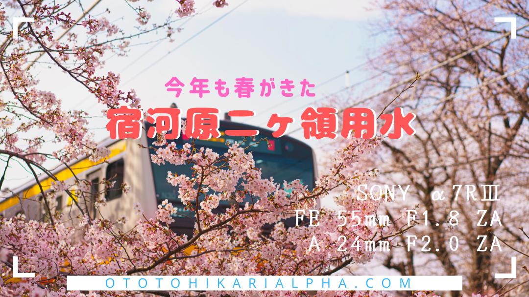 f:id:otohikarialpha:20200329145511p:plain