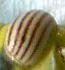 f:id:otokomaeno:20110525214017j:image