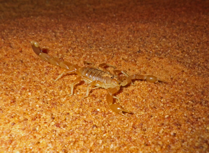 f:id:otokomaeno:20111012192842j:image