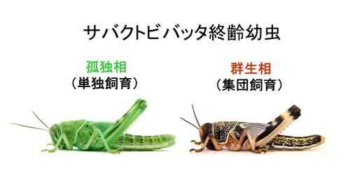 f:id:otokomaeno:20120205020331j:image