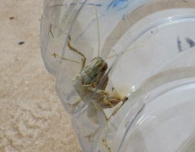 f:id:otokomaeno:20121010162355j:image