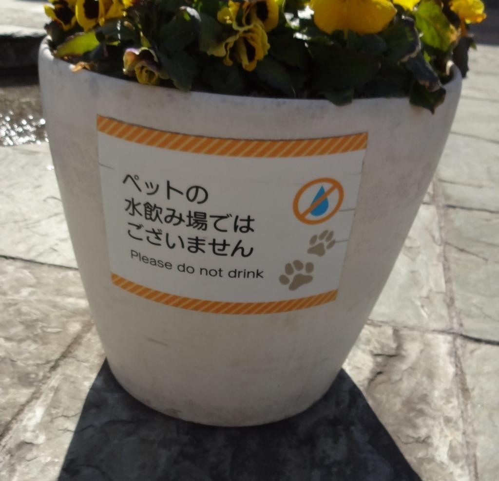 f:id:otominarukami:20180218225949j:plain
