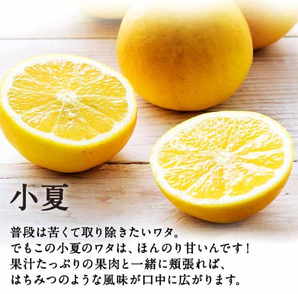 高知県産「小夏」