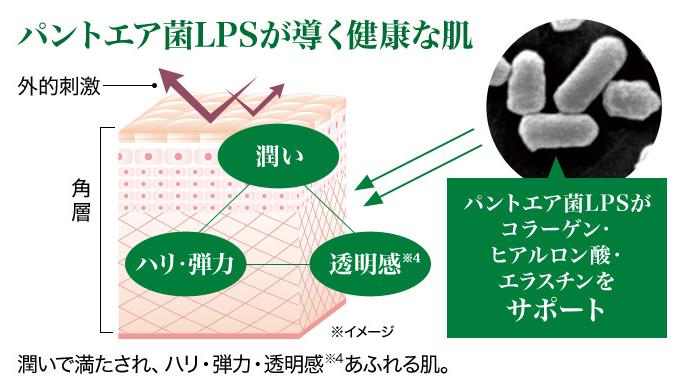 パントエア菌LPS