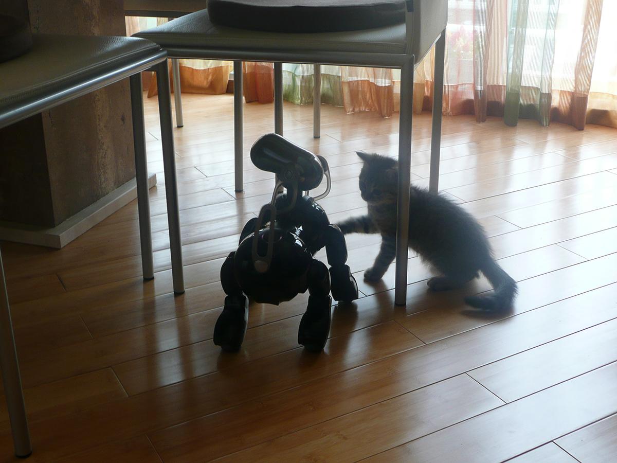 アイボと遊ぶ子猫