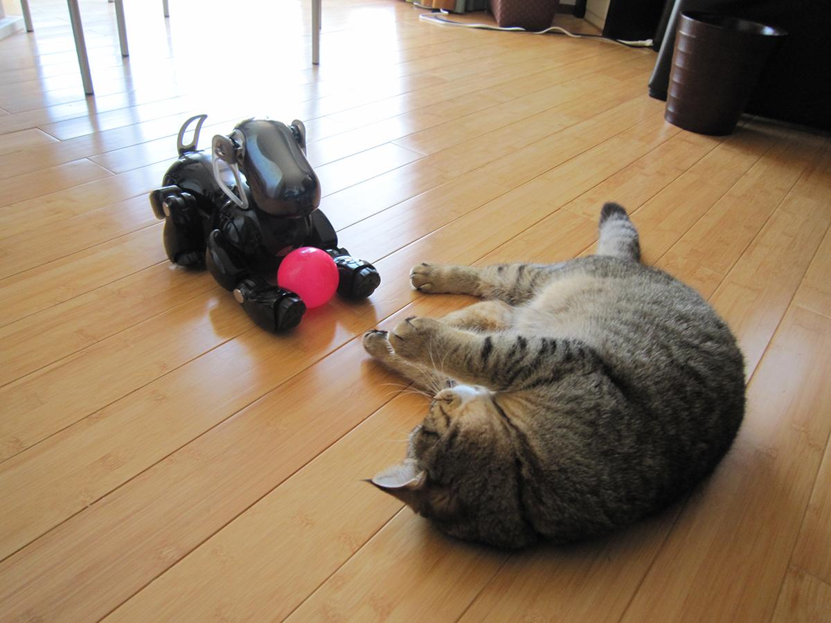 アイボと遊ぶ猫