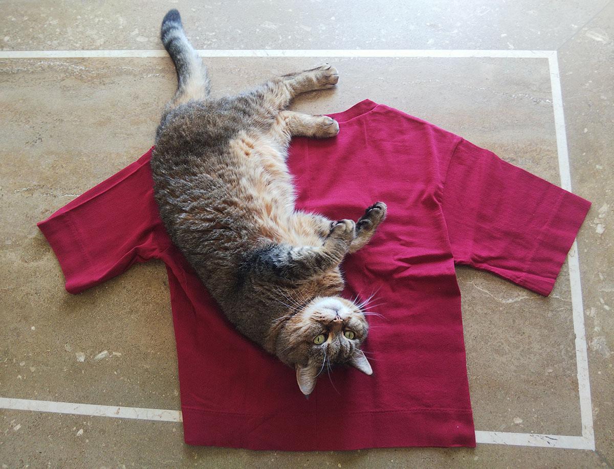 Tシャツに転がる猫