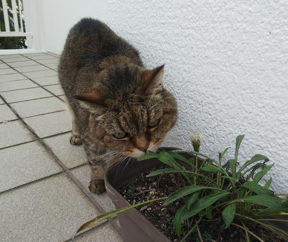 鉢植えの匂いを嗅ぐ与六