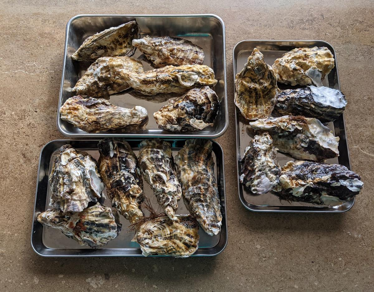 殻付き牡蠣の保存
