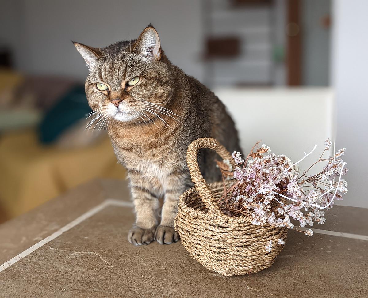 猫とドライフラワー