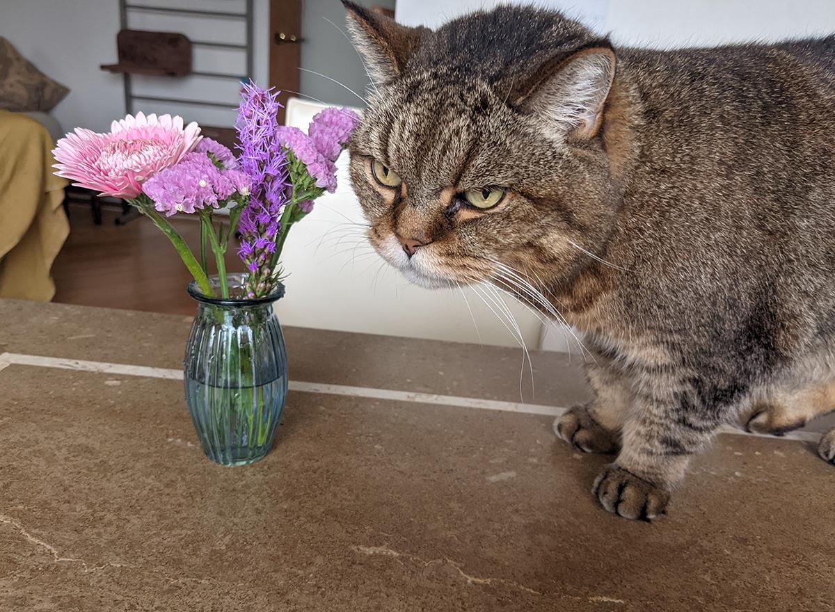 花に寄ってくる猫