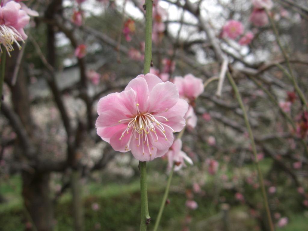 f:id:otono-ha:20170316212122j:plain