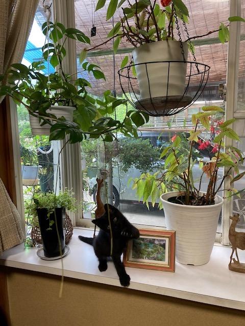 観葉植物の根が猫にやられる