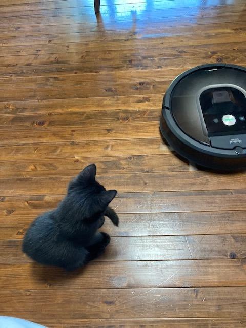 ルンバを凝視している(であろう)猫の後ろ姿