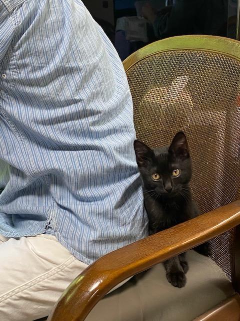 人の背中に隠れる猫
