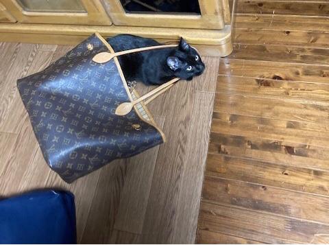 ヴィトンのバッグを持ってお出かけする猫