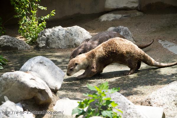 f:id:otters_yvonne:20160614135834j:plain