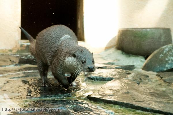 f:id:otters_yvonne:20160614135845j:plain