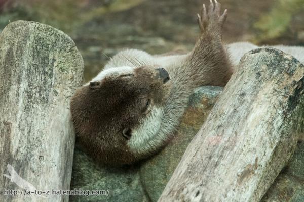 f:id:otters_yvonne:20160614135846j:plain