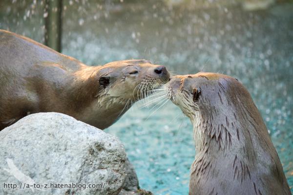 f:id:otters_yvonne:20160614135848j:plain