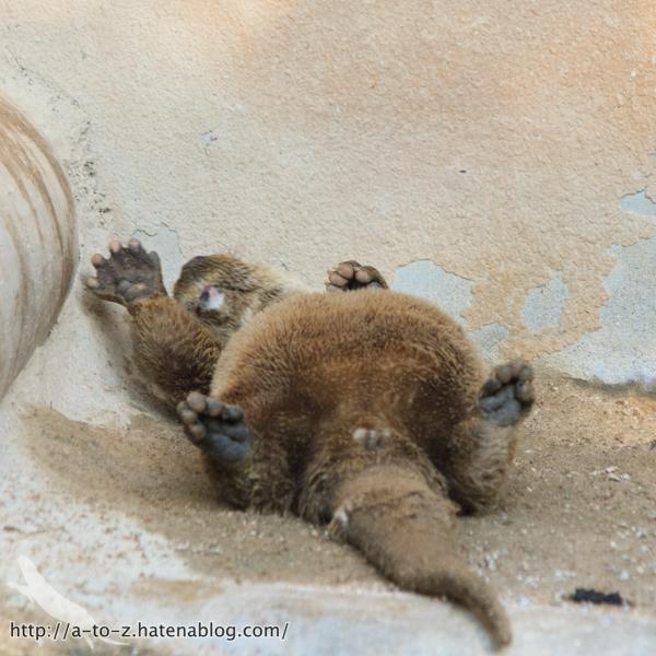 f:id:otters_yvonne:20160614135851j:plain