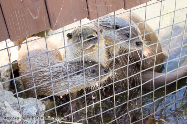 f:id:otters_yvonne:20160628162741j:plain
