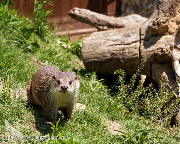 f:id:otters_yvonne:20160628162742j:plain