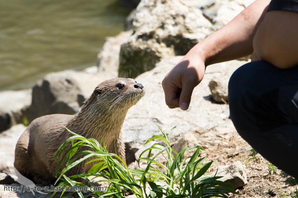 f:id:otters_yvonne:20160628162743j:plain