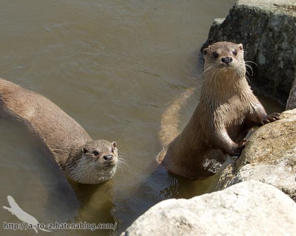 f:id:otters_yvonne:20160628162744j:plain