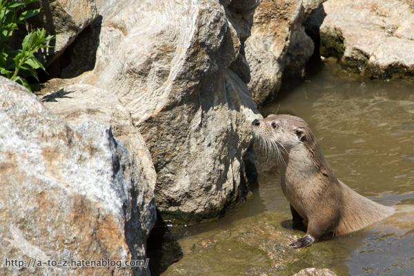 f:id:otters_yvonne:20160628162745j:plain