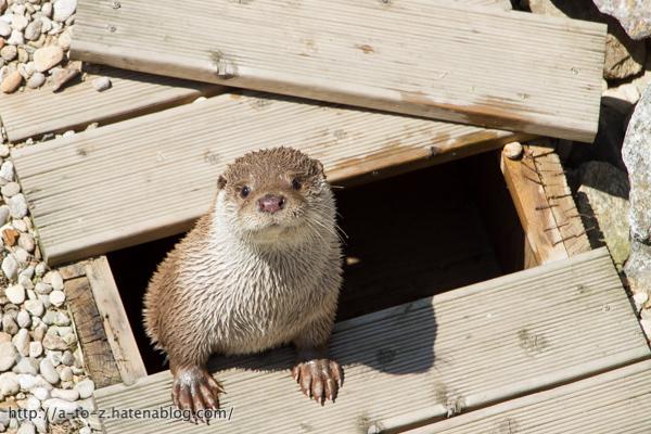 f:id:otters_yvonne:20160628162749j:plain